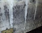 mold remediation-9