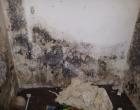 brooklyn mold remediation